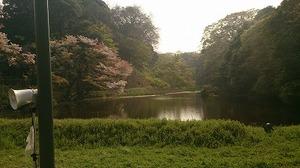 皇居さくら (7).jpg